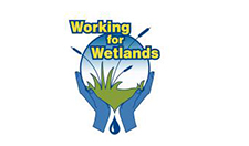 Working for Wetlands