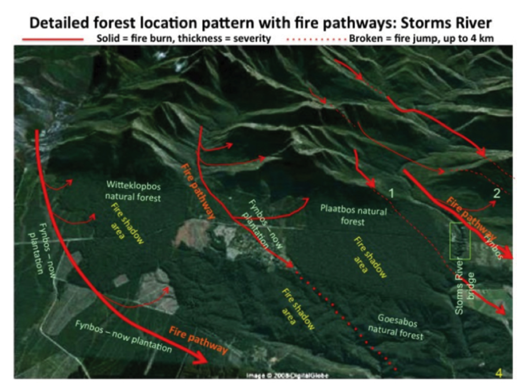 Detailed forest locations