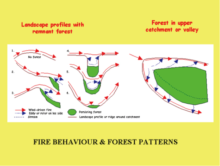 Fire Behaviour and Forest Patterns