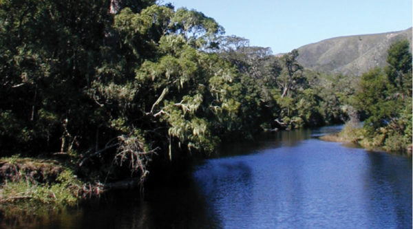 Southern Cape Forests unchanged for centuries