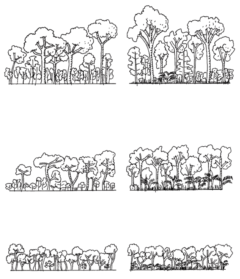 Natural Forest Types SCLI