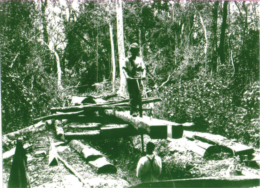 Traditional method of sawing hardwood planks in the Knysna forest.