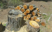 INVASIVES PROVIDING ESSENTIAL FIREWOOD TO COMMUNITIES