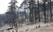 Recent destruction caused by wild fire