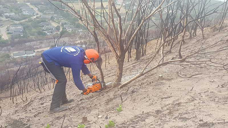 Invasive Alien Plants appearing after the Knysna Fire