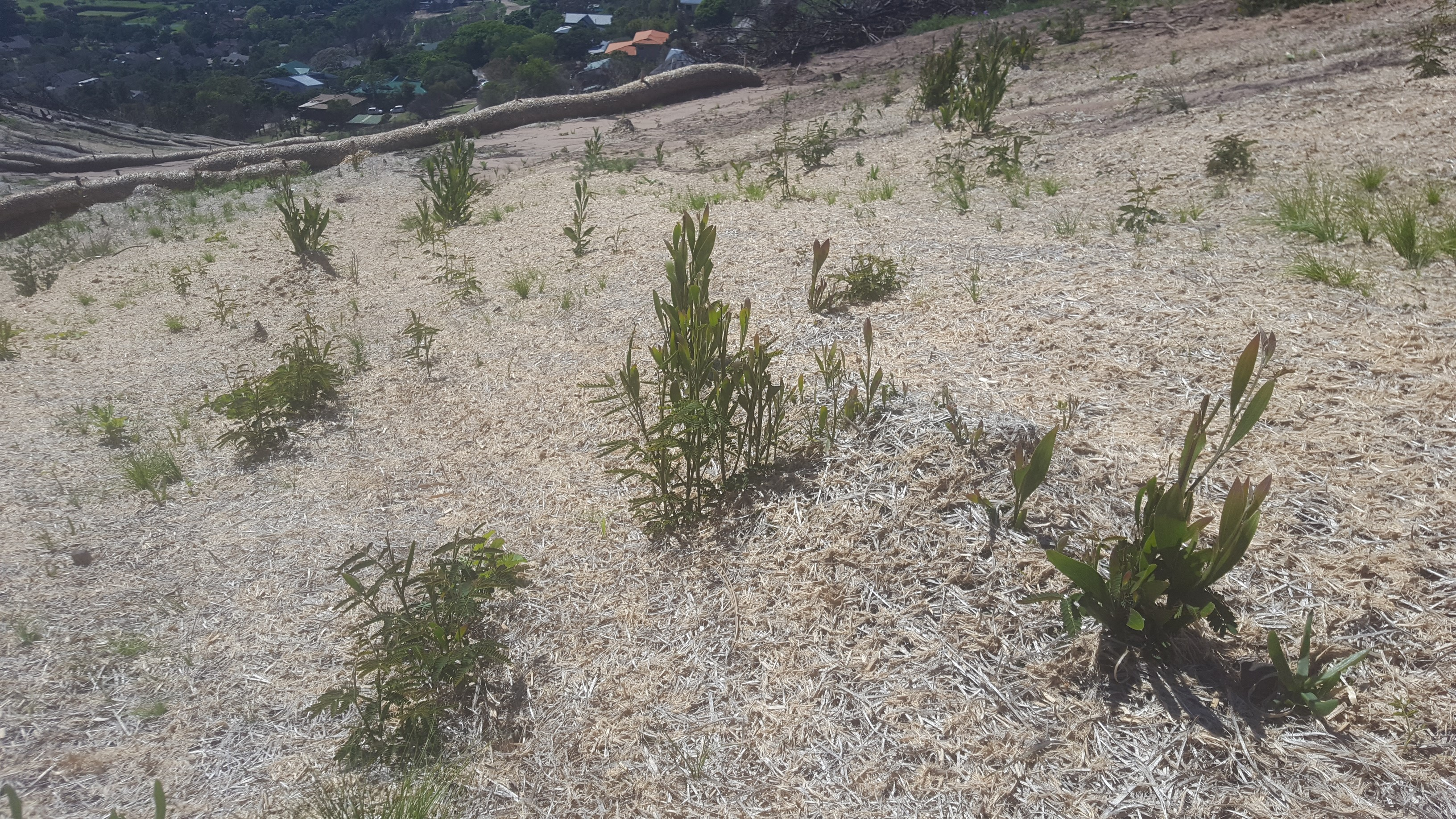 Garden Route: Post-fire plant regrowth patterns