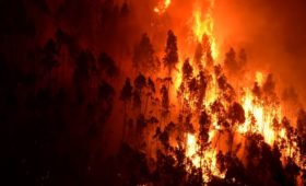 Knysna fires: How soon we forget