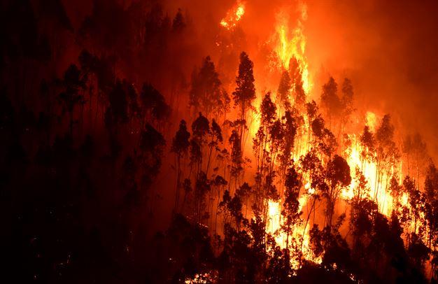 Sunday 7 June marks the 2017 Knysna wildfire disaster