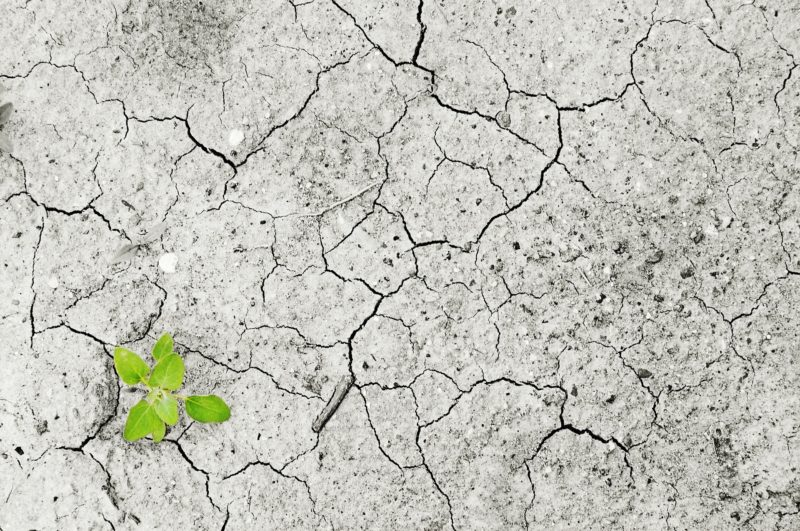 GRDM is taking proactive steps to deal with climate change