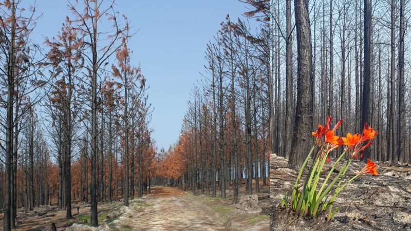 SCLI warns landowners about IAPs and the link to wildfires