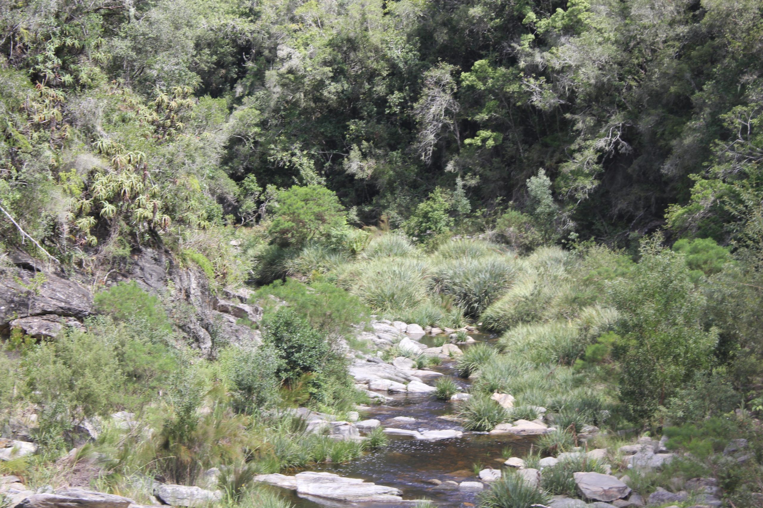 Southern Cape community to reflect on environmental management during December 2020 event